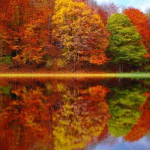Nature Notes October 2021